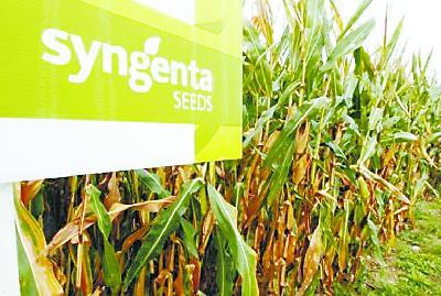 玉米出口中国遭拒 美国农民起诉转基因巨头